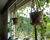 Workshop macramé plantenhangers met natuurlijk touw