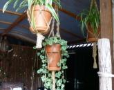 Workshop macramé plantenhangers/windlicht met natuurlijk touw.